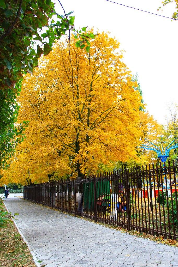 Осень в Приморско-Ахтарске. Улица Тамаровског